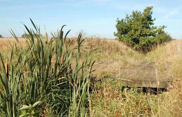 Bullrushes by a bridge over Milholme Brook, Grandborough Fields