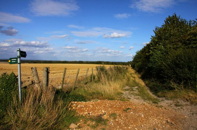 Bridleway along the hedgerow