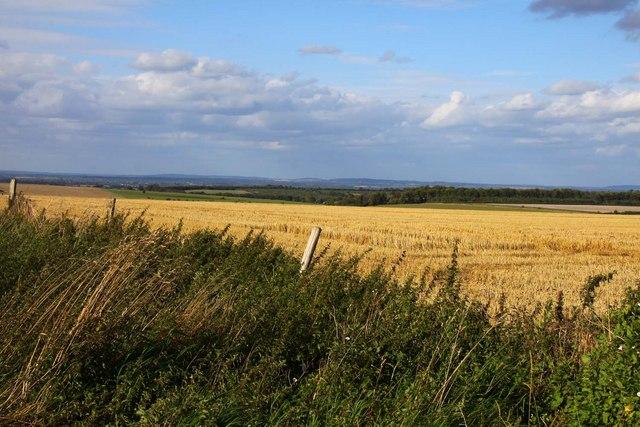 Arable field near Charlton Field