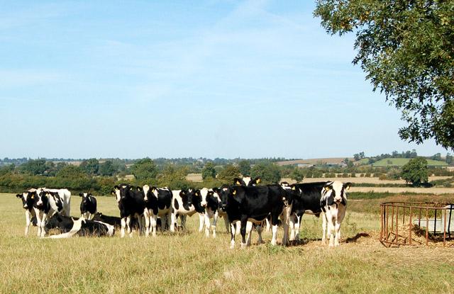 Valley Farm to Kites Hardwick bridleway (2)