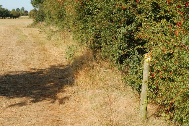 Valley Farm to Kites Hardwick bridleway (10)