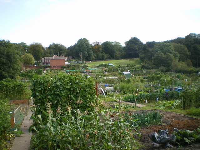 Gorge Road allotments, Sedgley