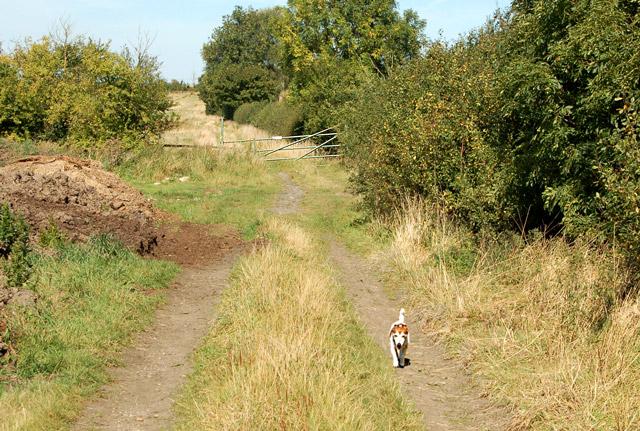 Footpath from Grandborough to Kites Hardwick (7)