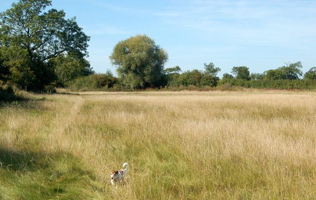 Footpath from Grandborough to Kites Hardwick (9)
