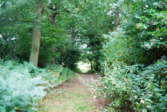 Tunbridge Wells Circular Path - Boy's Wood