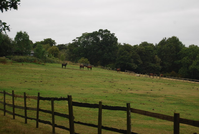 Horses by the Tunbridge Wells Circular Path, Knowles Bank Farm