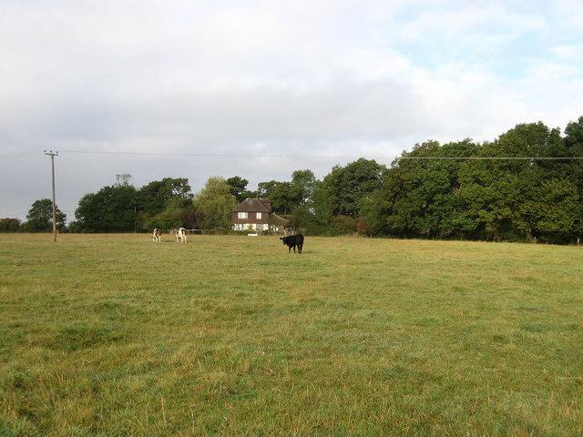 Ham Gate Field