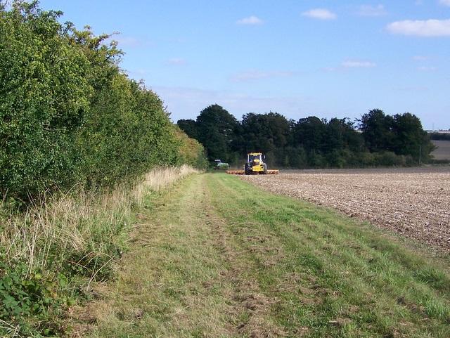 Field headland, Wilton