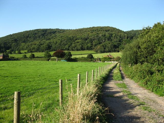 Track in the Holnicote estate