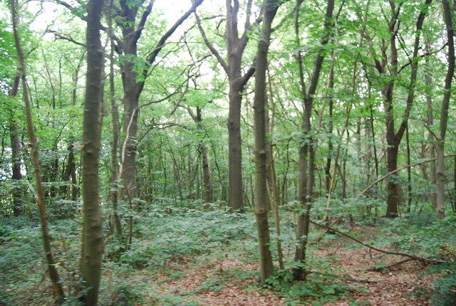 Church Wood near Kent College