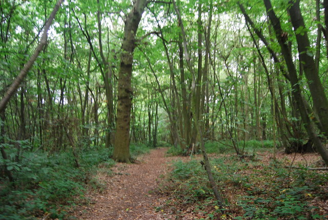 Tunbridge Wells Circular Path - Church Wood