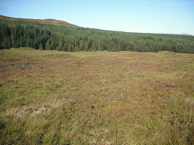 Forestry Leacann na Bò Gile