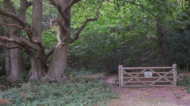 Oaks and gate on Pound Common