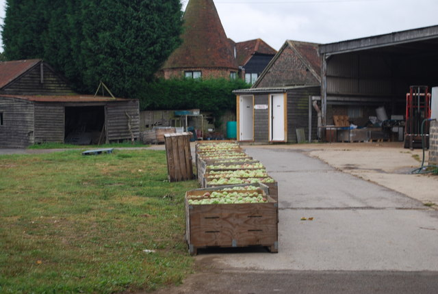Crates of Apples, Downingbury Farm