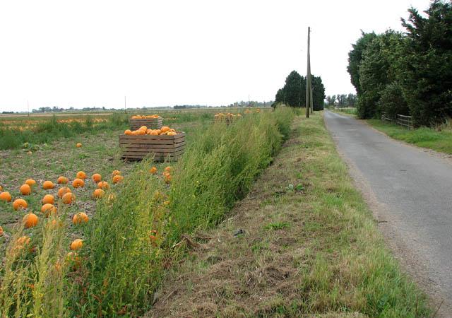 Euximoor Drove past Orton's Farm
