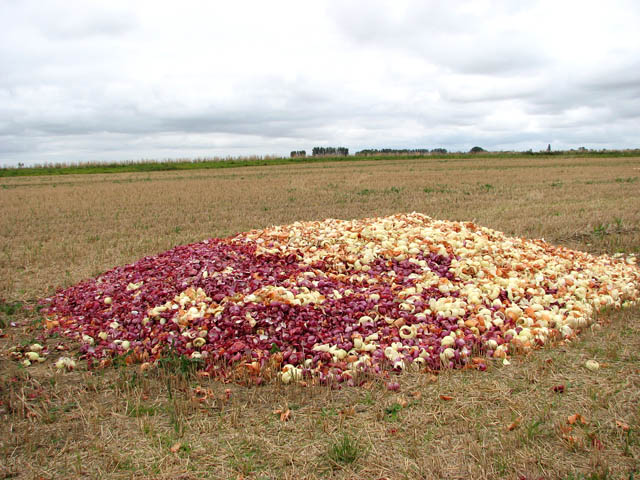 Remains from the onion harvest