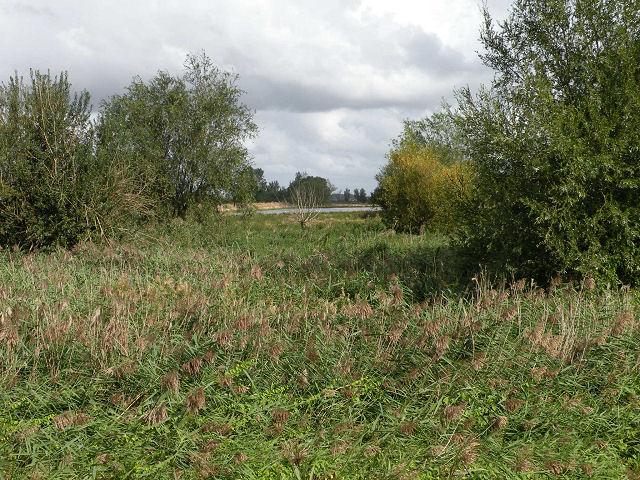 River Cam water meadows