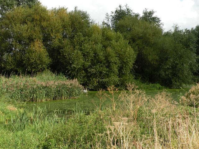 Lagoon near the Cam