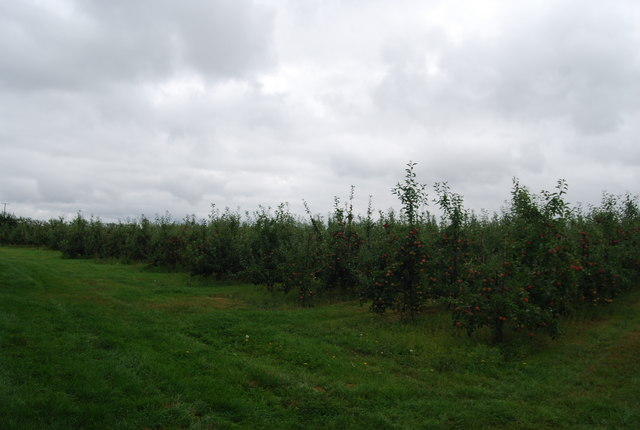 Apple orchards, Pippins Farm