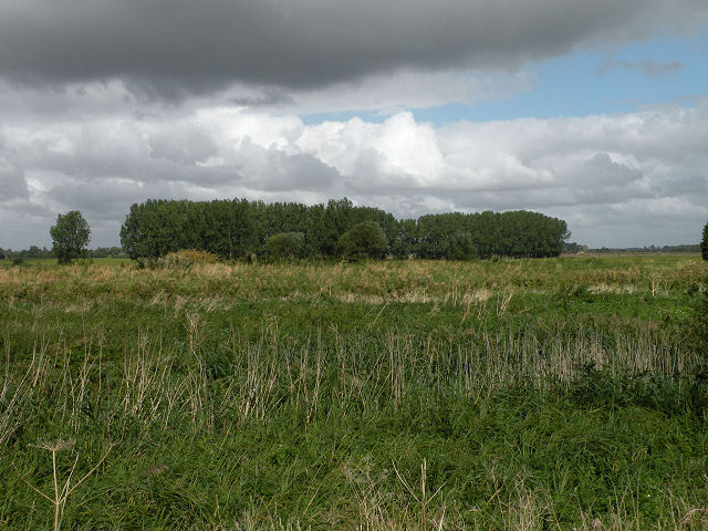 Windbreak trees north of the Cam