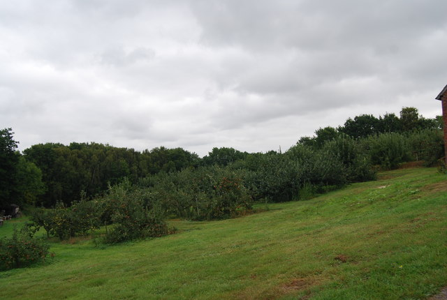 Apple Orchard, Pippins Farm