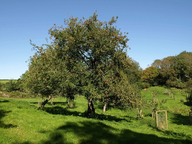 Orchard, South Allington