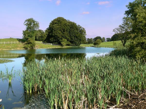 The pond in Jervaulx Park