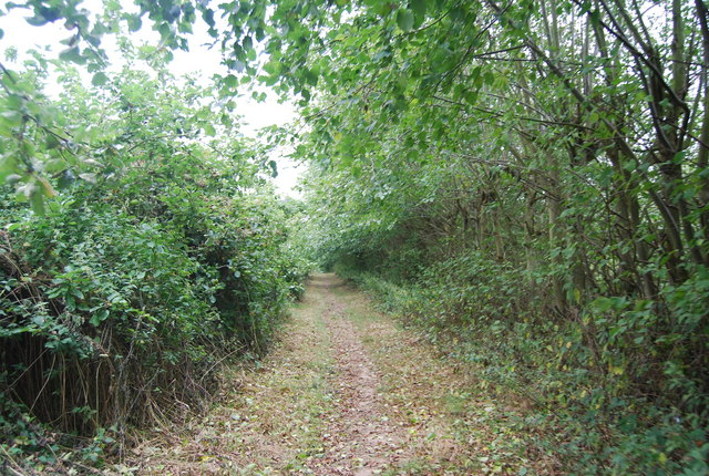 Tunbridge Wells Circular Path passing through deserted & overgrown orchards near Pippins Farm