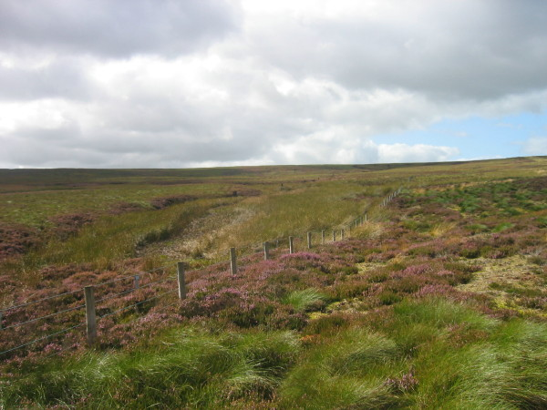 Moorland near Hartleyburn Common Plantation