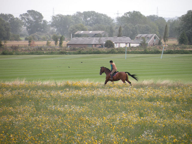 Exercising a horse in a field by the Cam