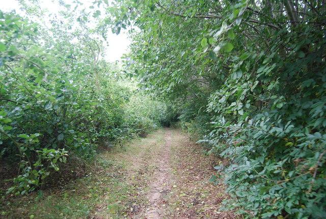 Tunbridge Wells Circular Path in overgrown orchards.
