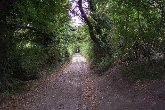 Stour Valley Walk through Down Wood