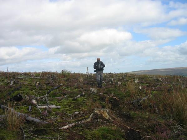 Path through Hartleyburn Common Plantation