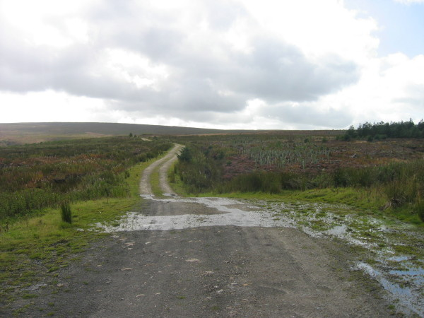 Forest track through Hartleyburn Common Plantation