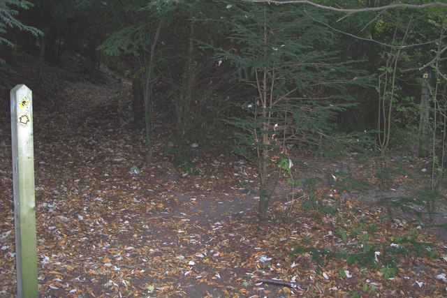 Footpath junction in Down Wood