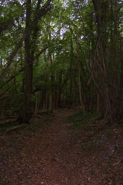 Footpath in Down Wood
