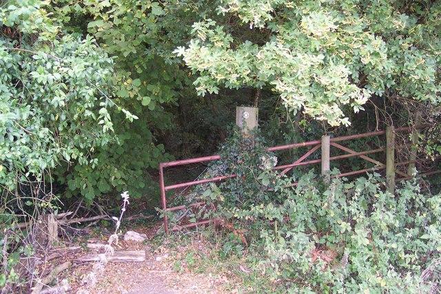 Footpath enters Down Wood
