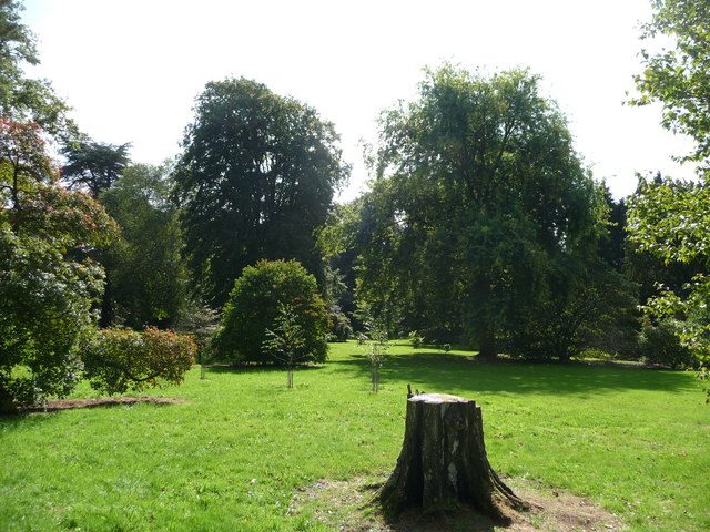 Mid Devon : Knightshayes Court, Tree Stump & Trees