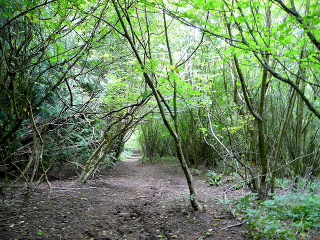 Path through Highmeadow Woods