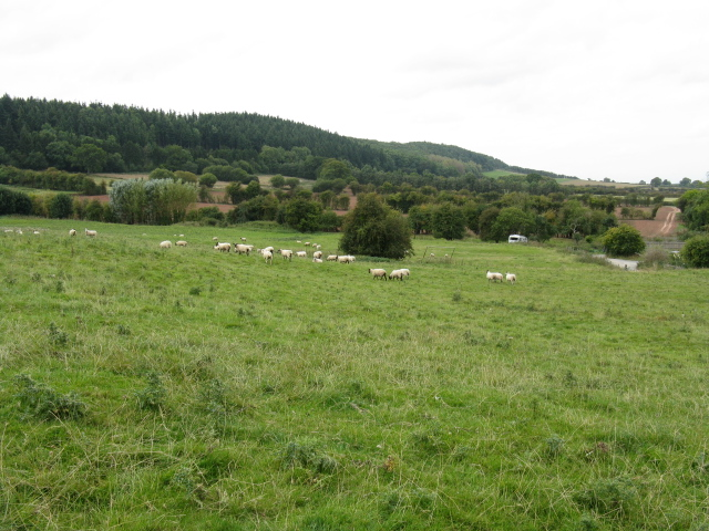 Sheep Grazing Above Brierley