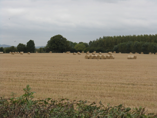 Gathered Harvest Near Brierley