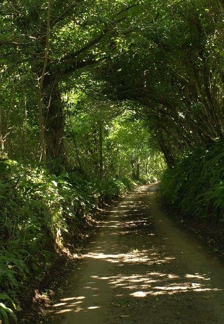 Lane to Lannacombe Green