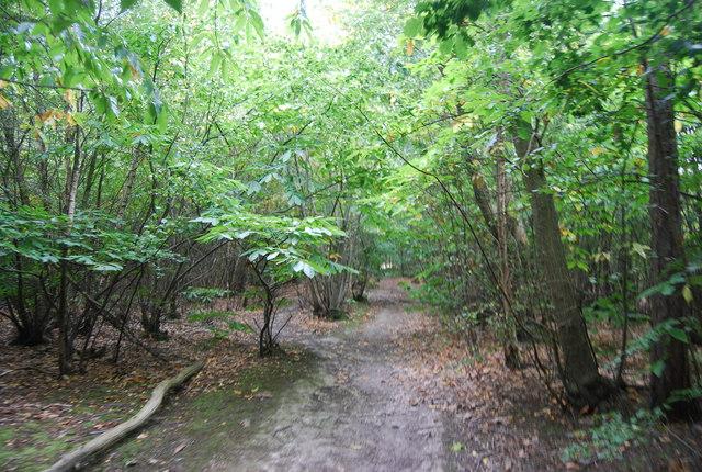 Tunbridge Wells Circular Path - Snipe Wood