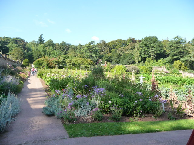 Mid Devon : Knightshayes Court, Allotment