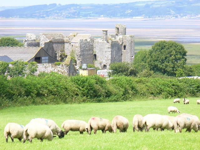 Lambs Grazing by Weobley Castle