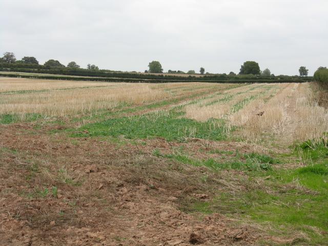 Stubble Field Near Bainstree Cross