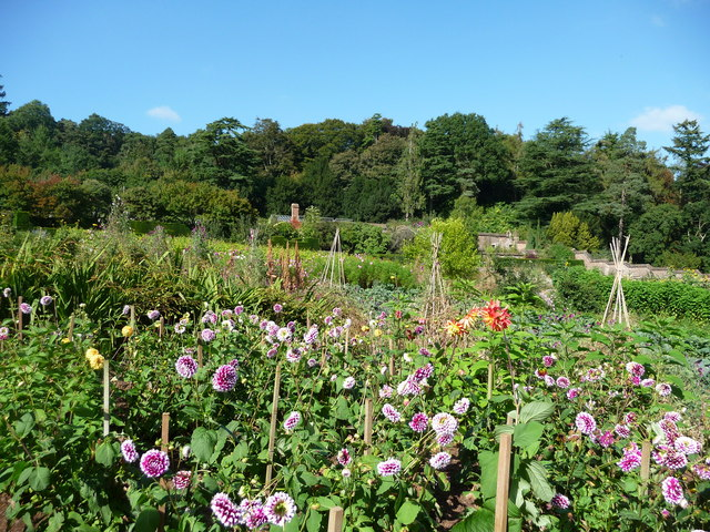 Mid Devon : Knightshayes Court, Flora in the Allotment