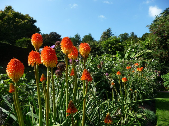 Mid Devon : Knightshayes Court, Flowers in the Allotment