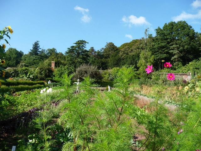 Mid Devon : Knightshayes Court, Allotment & Flowers