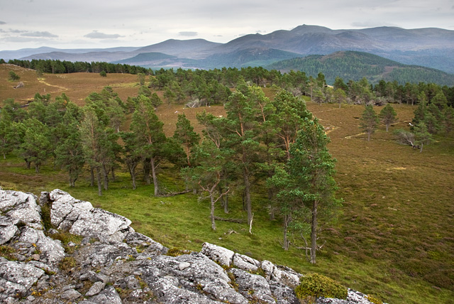 Outcrop and woodland east of Meall Gorm